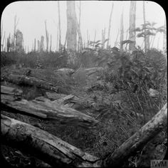 Shell damaged trees in Oppy Wood, October Pilgrimage, Wwi, Westerns, Shell, Trees, Tree Structure, Wood, Conch, Bookshelves