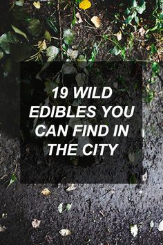 19 Wild Edibles You Can Find In The City   Survival Shelf   Survival & Preparedness Links
