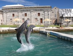 Dolphin Quest Dockyard Bermuda