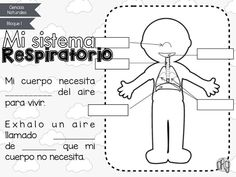 Fichas de Primaria: Sistemas del cuerpo humano Elementary Spanish, Elementary Science, Science For Kids, Science And Nature, Elementary Schools, Improve English, 3rd Grade Classroom, Classroom Language, Body Systems