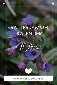 Natur & Kräuter Wissen: Kräutersammelkalender März - Liste von Kräutern, die im März zu sammeln sind + Feiertag und Brauchtum