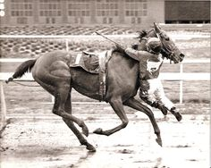 Feb. 3, 1989: Apprentice jockey Nate Hubbard hung on for second literally when his horse, Sweetwater Oak, stumbled near the finish line at Golden Gate Fields and flipped the rider out of his saddle. As he tumbled forward, Hubbard grabbed on to the fillys neck and hung in mid-air until the race was over. The track stewards ruled it an official finish because Hubbards feet never touched the ground and Sweetwater Oak carried her assigned weight throughout the race.