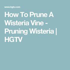 How To Prune A Wisteria Vine - Pruning Wisteria | HGTV