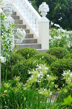 White flower garden - roses and white Lilies of the Nile Love Garden, Summer Garden, Dream Garden, Garden Roses, White Lilies, White Roses, White Flowers, Manor Garden, Terrace Garden