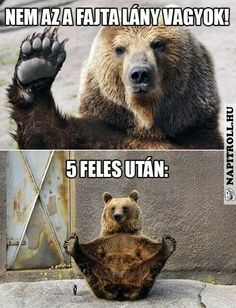 Lany, Brown Bear, Troll, Work Hard, Funny Animals, Hilarious, Jokes, Homeland, Bears