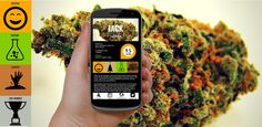 Our mobile app is now FREE to download!  https://play.google.com/store/apps/details?id=com.mobincube.android.sc_3H53X5  #cannabis #weed #apps #stonerfam #pot #dank