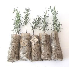 Rosemary favors