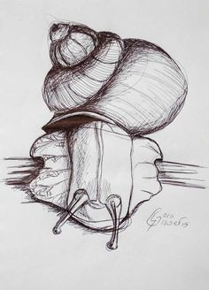Schnecke Mehr Schwarz sehen, Skizze Zeichnung mit schwarzem Kuli von sgkunst