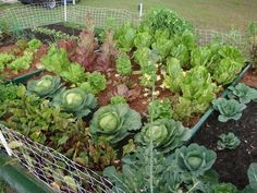 How to Prevent Weeds in a Vegetable Garden. No Problem! We'll show you How to Get Rid of Weeds in a Vegetable Garden too. Mixed Vegetables, Growing Vegetables, Veggies, Organic Gardening, Gardening Tips, Vegetable Gardening, Fruit Trees In Containers, Lactuca Sativa, Lettuce Seeds