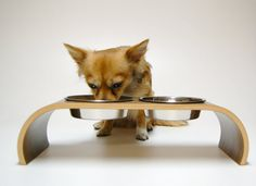 Small raised feeder choice of 6 veneers by vurvdesign on Etsy Cat Vs Dog, Pet Feeder, Pet Furniture, Dog Accessories, Beautiful Dogs, Mans Best Friend, Dog Bowls, Your Pet, Etsy