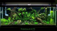 Aquascape I like.