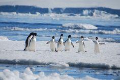 ... pour notre reportage en antarctique mer et marine vincent groizeleau