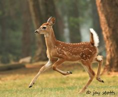 come to the woods, for here is rest Deer Photos, Deer Pictures, Cute Animal Pictures, Animals And Pets, Baby Animals, Cute Animals, Most Beautiful Animals, Beautiful Horses, North American Animals