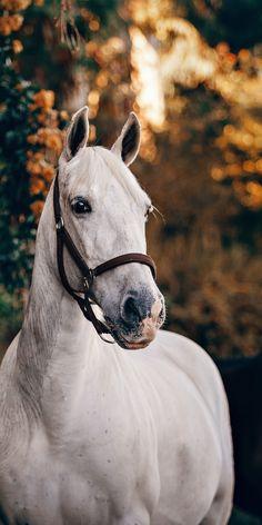 White feline, animal, horse wallpaper