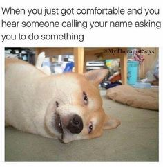 ImgLuLz Serve you Funny Pictures, Memes, GIF, Autocorrect Fails and more to make you LoL. Funny Animal Pictures, Funny Animals, Cute Animals, Film Pixar, Latest Jokes, Funny Quotes, Funny Memes, Motivational Quotes, Pet Memes