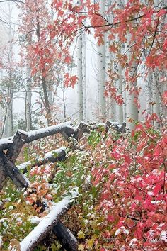 First Snowfall, Wasatch Mountains, Utah