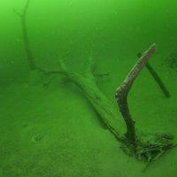 Zürichsee / Tauchen im Süsswasser / Galerie | Nies.ch Lake Zurich, Gras, Fresh Water, Diving, Scuba Diving