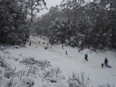Melbourne WeekendNotes - Mt Donna Buang in the Snow - Melbourne