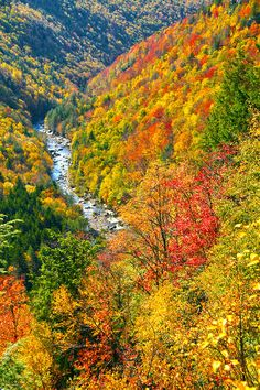 Fiery colors begin their yearly conquest of the hills, propelled by the autumn winds.