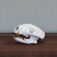 This is a skunk skull with gold teeth. I don't know why I want it but I do. Life is a mystery.