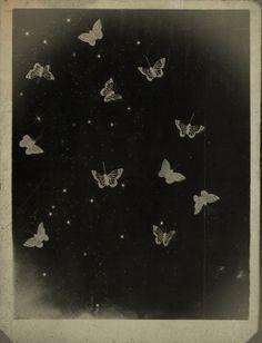 Work (2009-2016) rimelneffati.com - butterfly
