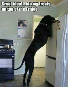 Great idea... Hide my treats on top of the frig!