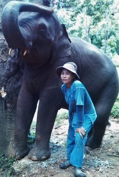 Interested in the history of the mahout-elephant relationship?