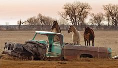 Alberta Ranch