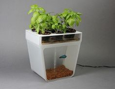 LOVE this idea!   The Aquaponics Garden: an elegant table-top fish tank that cleans itself & grows fresh food at the same time. A closed-loop ecosystem!