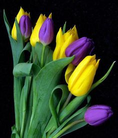 tulipani ❤ﻸ•·˙❤•·˙ﻸ❤   ᘡℓvᘠ □☆□ ❉ღ // ✧彡●⊱❊⊰✦❁❀ ‿ ❀ ·✳︎· ☘‿FR JUN 16 2017‿☘✨ ✤ ॐ ♕ ♚ εїз⚜✧❦♥⭐♢❃ ♦♡ ❊☘нανє α ηι¢є ∂αу ☘❊ ღ 彡✦ ❁ ༺✿༻✨ ♥ ♫ ~*~ ♆❤ ☾♪♕✫ ❁ ✦●↠ ஜℓvஜ .❤ﻸ•·˙❤•·˙ﻸ❤