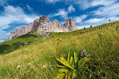 #CamminateconleGuide #DolomitiWalkingSummerFestival #ScuolaItalianaNordicWalking #Sabato18Giugno