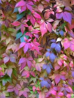 Shared by Cara Sposa. Find images and videos about nature, amazing and red on We Heart It - the app to get lost in what you love. Fall Wallpaper, Flower Wallpaper, Image Fruit, Beautiful World, Autumn Leaves, Beautiful Flowers, Scenery, Bloom, Photos