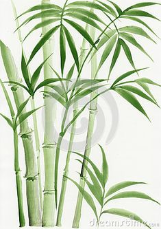 Peinture originale d'aquarelle de palmier bambou – Millions of photos, vectors, videos and creative music files for your inspiration and projects. Watercolor Plants, Watercolor Leaves, Watercolor Paintings, Green Watercolor, Bamboo Drawing, Bamboo Art, Bamboo Image, Plant Painting, Plant Art