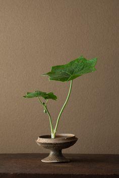一日一花 川瀬敏郎 2012年5月31日(木) この季節に大きな葉を見ると気持がよい。陽光に導かれた姿です。  花=八角蓮(ハッカクレン)  器=須恵器高杯(古墳時代)