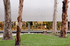 Image 4 of 32 from gallery of Milson Island Indoor Sports Stadium / Allen Jack+Cottier Architects. Courtesy of AJ+C Millionaire Homes, Bamboo Structure, Sports Stadium, Sport Hall, Canoe, Architecture Design, The Neighbourhood, Indoor, Exterior