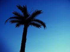 Palm Tree in Vienna, 1020 (C) Daniel Retzl