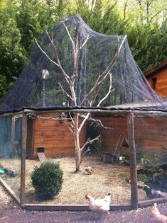 Let's make the second coop around the other tree Hacer Gallinero Casero de Madera Portable Chicken Coop, Backyard Chicken Coops, Diy Chicken Coop, Chickens Backyard, Chicken Run Ideas Diy, Chicken Recipes, Chicken Barn, Chicken Runs, Chicken Cages
