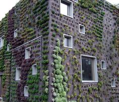 Living walls in the Netherlands