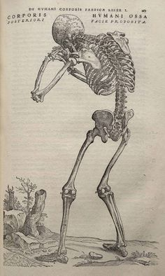 """Morbid Anatomy: Luo Ping, The Birth of """"Ghost Painting,"""" and Vesalian Anatomy in China; A Guest Post by Michael Sappol"""