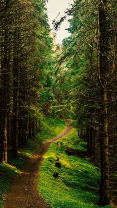 Forest path [photographer and location unknown] Forest Path, Tree Forest, Landscape Photography, Nature Photography, Beautiful Places, Beautiful Pictures, Image Nature, Walk In The Woods, Plantation