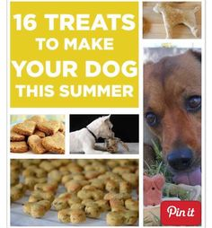 16 Treats To Make Your Dog This Summer ❤️
