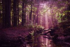 Capturing the Hauntingly Beautiful Atmosphere of the Dutch Woodlands - My Modern Met