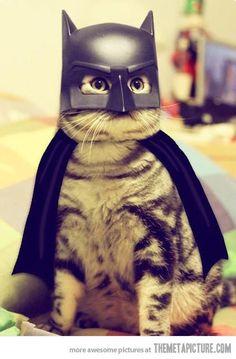 Batcat… @Jess Pearl Pearl Wise
