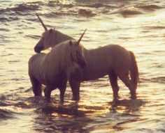 Unicorns: Totally real. Proof.