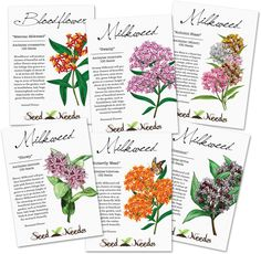 The Monarch butterflies need our help more than ever before! You can help regrow Milkweed plants in your own garden, by planting the seeds within this Milkweed Seed Assortment. Asclepias is very important to the Monarch butterfly as it is categorized as a host plant. The caterpillars will enjoy it's large, tender leaves and adult Monarchs, as well as many other butterflies look to it for it's rich source of nectar.