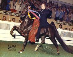 Imperator, an American Saddlebred