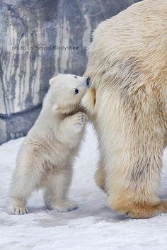 Mammy is always tasty by sergei gladyshev