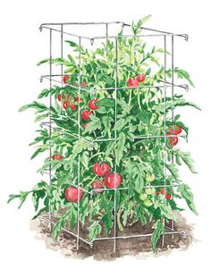Tomato Cages - got these this year... love them for far!!!  (and the pepper ones)