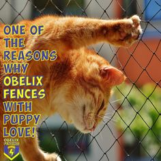 There are many reasons why and how Obelix Fencing came up with the concept of and although they try, copycats just can't seem to match the original Obelix Fencing Gate Motors, Barbed Wire, Social Media Design, Fencing, Copycat, Puppy Love, Sad, Concept, Puppies