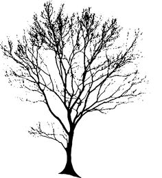 Tree, Silhouette, Black - Free Images on Pixabay